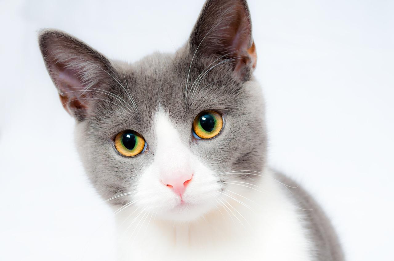 Jakie przysmaki podawać kotu?
