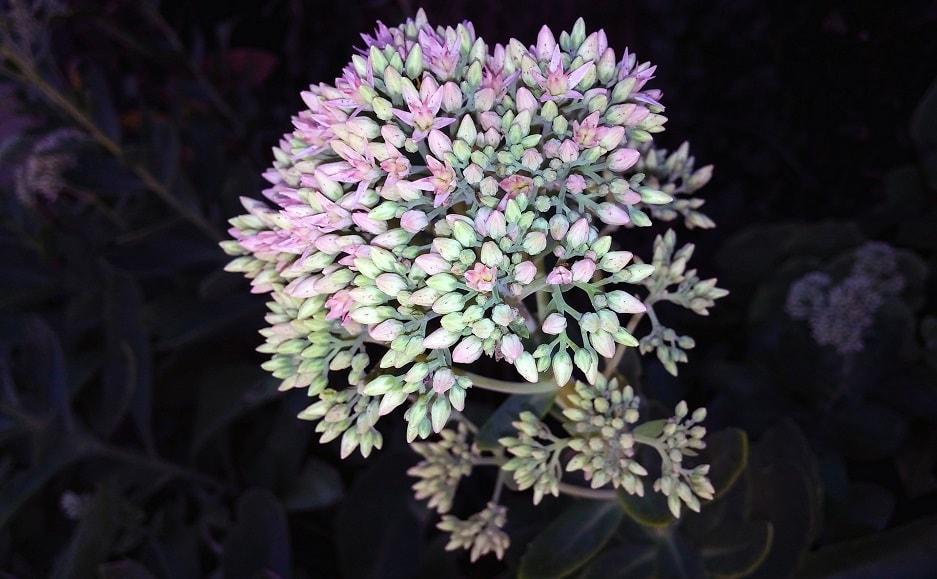 Jak wybrać jesienne kwiaty do skrzynek na balkon i taras?